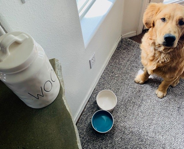 shows how you can decorate around pet necessities, and make it look like home decor. Home Decor when you have pets.